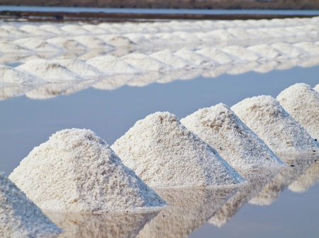 Heap of sea salt in a field prepared for harvest  photo