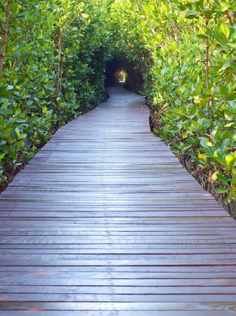Boardwalk underpass of trees to the otherworldly of deep forest
