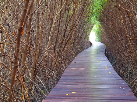 Boardwalk underpass of dead trees to the otherworldly of deep forest photo