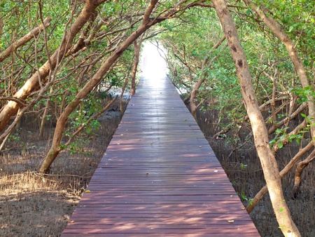 Boardwalk underpass of trees to the otherworldly of deep forest Stock Photo - 12976739