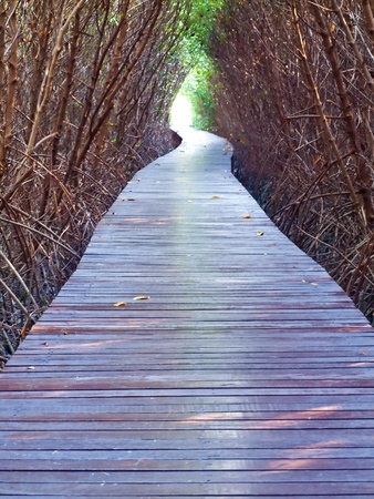 arboles secos: Boardwalk paso inferior de los �rboles muertos al otro mundo lo profundo del bosque