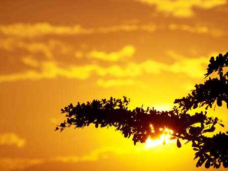 Sun shining through branch of tree with golden sky Stock Photo - 13240759