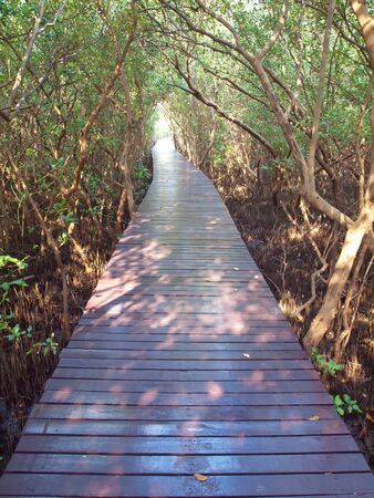 Boardwalk underpass of trees to the otherworldly of deep forest photo
