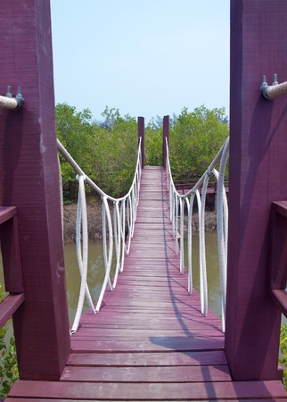 Rope bridge cross over canal in mangrove forest photo