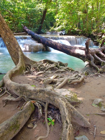 deep roots: Beautiful waterfall in deep forest in Thailand