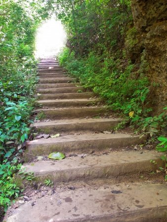 Staircase in deep forest with mysteus light in the end Stock Photo - 16255483