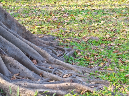 Mass root system above the ground in forest Stock Photo - 17328589