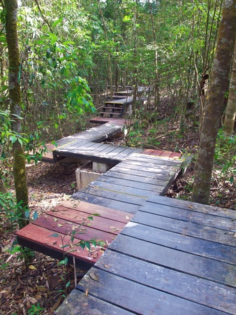 Boardwalk among trees lead to deep forest photo