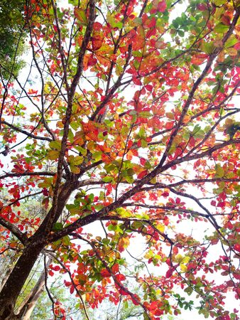 Beautiful colourful leaves in autumn time on gradient white sky photo