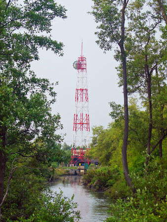 telecoms: Telecoms tower in deep of mangrove forest