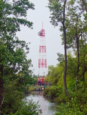 telecoms: Torre telecomunicazioni in profondo della foresta di mangrovie