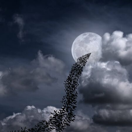 horrible: Bats flying again full moon and fantasy cloudy sky may use for horrible theme or halloween theme Stock Photo