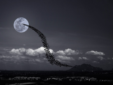 horrible: Bats flying again full moon rises over the mountain and village may use for horrible theme or halloween theme