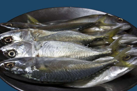 Mackerels prepare to cook  in stainless dish Stock Photo - 7144234