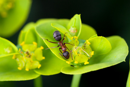 Macro detail of ant walking on the flower Stock Photo