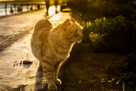 Dramatic cat during sunset on beach promenade
