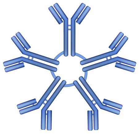 IgM type antibody molecule pentamer vector illustration Illustration