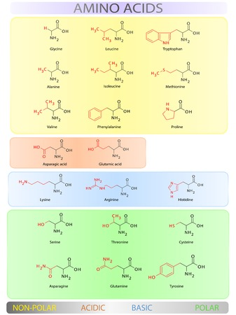 proline: Amino acids colorful clear table vector illustration