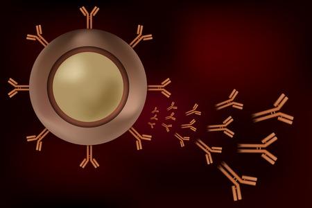activacion: Gl�bulos blancos de linfocitos B de plasma celular produce anticuerpos