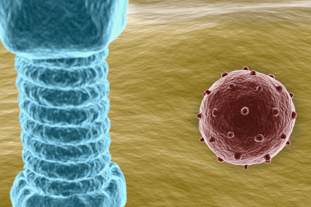glued: Virus on cell surface Stock Photo
