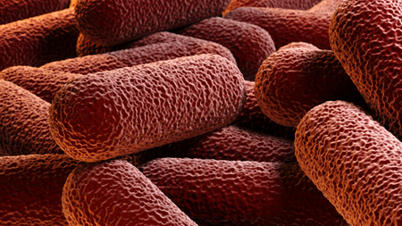 e coli: Crowd of rod-shaped bacteria Stock Photo