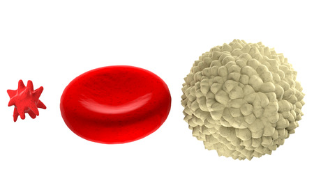 Main blood cells in scale isolated on white background Stock Photo