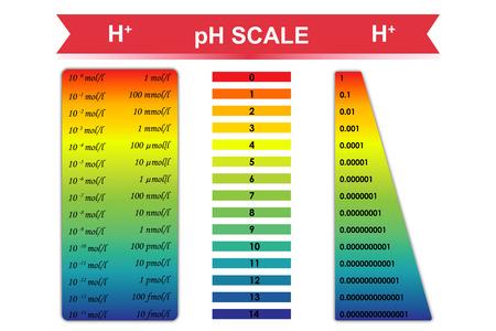 Gráfico de escala de pH con la concentración de iones de hidrógeno correspondiente Foto de archivo - 42176198