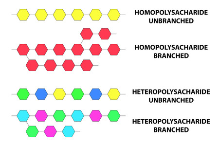 Polysaccharide types of monomer units and their binding