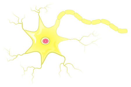 dendrites: Simple vector illustration of neuron cell and axon