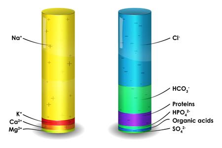 Human blood plasma ion composition gamblegram vector illustration