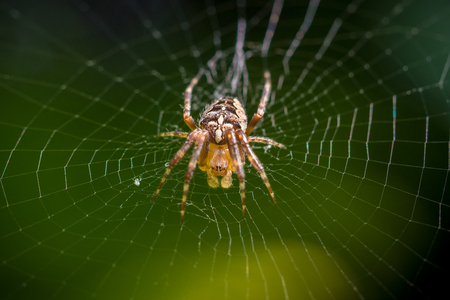 Spider on web with green natural background macro