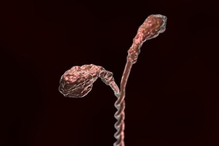 skeletal muscle: Myosin molecule structure illustration on dark background