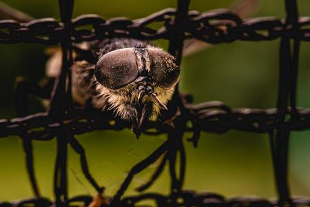 Fly trapped in net macro
