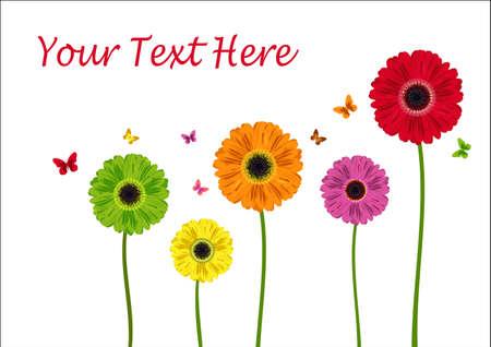 gerbera daisy: Color de las flores de gerbera aislados en blanco. Ilustraci�n vectorial Vectores
