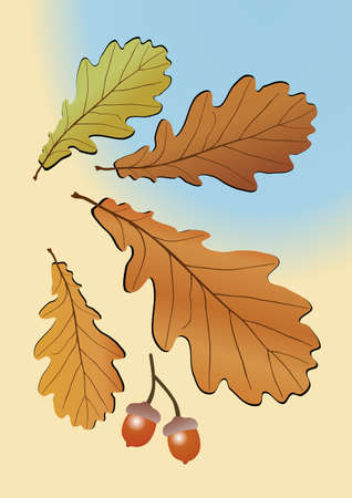 walnut: Autumn oak leaves. Vector illustration