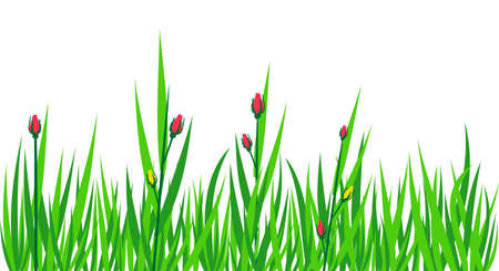 herbage: Grass green background vector