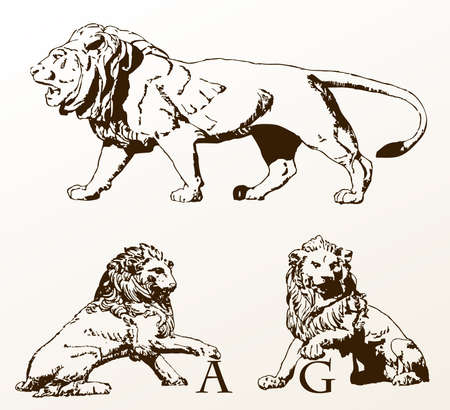 heraldic animals lions old isolated white. illustration