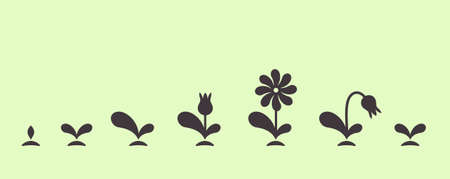 Vector green plant growing seed foliage flower small set Illustration