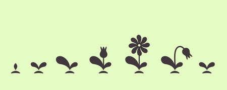 Vector groene plant groeit zaad blad bloem kleine set