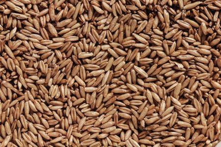 plant seed: a lot of seed oats for sale