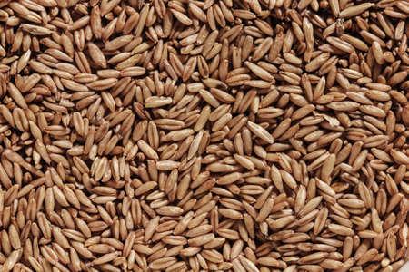 semilla: una gran cantidad de semillas de avena en venta Foto de archivo