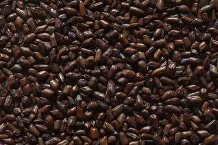 cassia tora beans, cassia tora, chinese coffee beans, coffee beans, coffee background, coffee beans, asian coffee, chinese beans, chinese beans