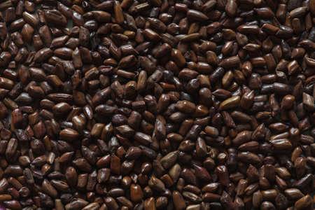cassia tora bonen, Cassia Tora, Chinese Koffiebonen, Koffiebonen, Koffieachtergrond, Koffiebonen, Aziatische Koffie, Chinees Bonen, Chinees Bonen