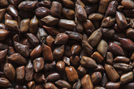 cassia tora beans, cassia tora, chinese coffee beans, coffee beans, coffee background, coffee beans, asian coffee, chinese beans, chinese beans