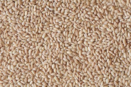 barley seeds: pearl barley, barley photo, barley background, dry barley, raw barley, barley grain, barley seeds, raw barley, organic barley, pile of barley