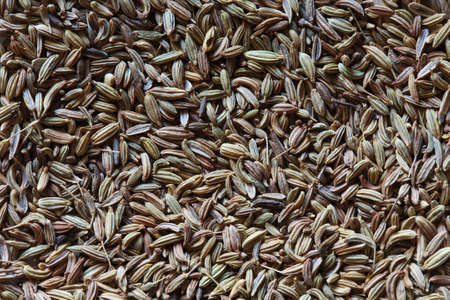 foeniculum: fennel seeds, fennel photo, fennel background, raw fennel, dry fennel, pile of fennel