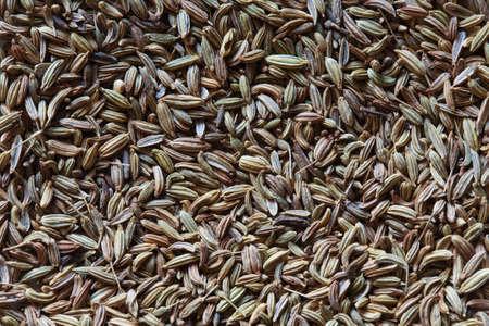 fennel seeds: fennel seeds, fennel photo, fennel background, raw fennel, dry fennel, pile of fennel