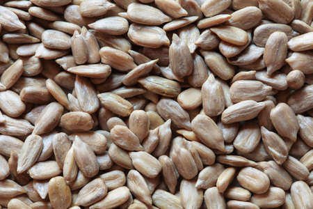 semillas de girasol: semillas de girasol peladas, semillas de girasol, semillas de girasol de fondo. semillas de girasol foto, semillas crudas