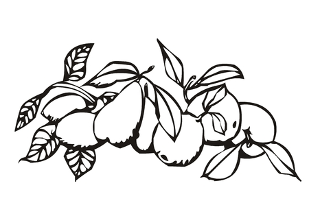 shadowgraph: sweet and fleshy product of a tree Illustration