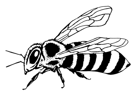 a honey bee Produces wax and honey